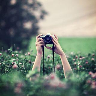 Paparazzi champs fleurs, 90ko
